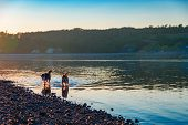 Landscape Summer Evening On The River. Silhouettes Of Dogs Swimming In The River In The Evening Rays poster