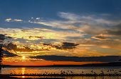 Seagulls Flying Over The Waskesiu Lake In Summer Sunset poster