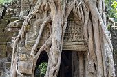Ancient Stone Ruin Of Banteay Kdei Temple, Angkor Wat, Cambodia. Ancient Temple In Old Tree Roots. A poster