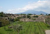 View At Vesuvius From Herculaneum