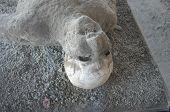 Pompei Man