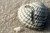 image of sabbatical  - Seashell on the seashore in the sand - JPG