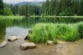 Reflection Of Trees In Water Surface Of The Forest Lake Called Vrbicke Pleso, Demanovska Dolina, Slo poster