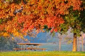 Autumn tree bench