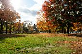 Cambridge Common In Fall Landscape