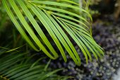Green Tropical Leaf, Background Photo. Concept Of Botany And Foliage. poster