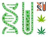 Genetic Analysis Composition Of Weed Leaves In Different Sizes And Green Variations. Vector Flat Wee poster