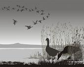 Wildgänse, verzögerte Migrating.eps