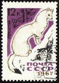 Ermine On Post Stamp