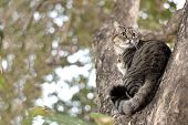 Tabby Cat Catch On Tree, Cute Cat, Gray Tabby Cat, Cute Tabby Pussycat, Gray Pussycat, Adult Pussyca poster