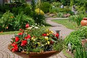 stock photo of lobelia  - A garden with a clay container with colorful begonias daisies and lobelia - JPG