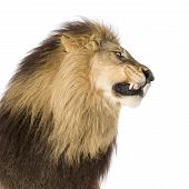 Lion\'S Head In Front Of A White Background