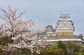 Sakura Flower And Himeji Castle In Japan In Springtime poster