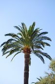 Palm Tree In A Blue Sky
