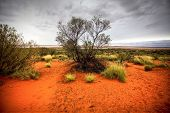 picture of oz  - australian outback - JPG