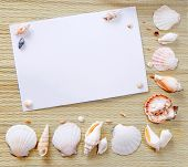 Paper With Seashells