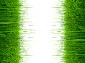 High resolution green,fresh and natural 3d grass field or lawn isolated on white background, ideal f