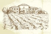 Vineyard - hand drawn illustration