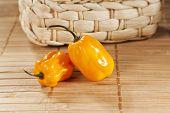 two yellow habanero chili peppers