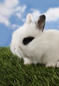 Lovely white rabbit with black monocle on eye
