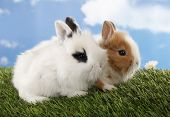Two rabbits bunnies on green grass