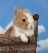 Rabbit baby bunny outdoor