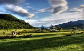picture of ulaanbaatar  - Mongolian dwelling on the green plain of grass