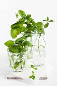 Fresh Mint In Glass Containers