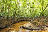 picture of lowlands  - Stream winding through lowland tropical rainforest in the Ecuadorian Amazon - JPG