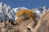 stock photo of mt whitney  - view of mt - JPG