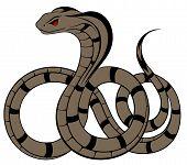image of cobra  - Vector Snake - JPG