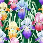 Seamless Background with Multicolored Iris Flowers
