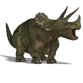 Dinosaurier Triceratops