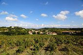 Typical landscape in Provence , France with vineyard and small village at the background