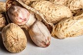 stock photo of groundnuts  - An opened groundnut reviewing its inside content - JPG