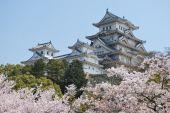 Himeji-Burg während der Kirschblüte