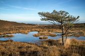stock photo of marshlands  - Autumnal blue sky over marshlands landscape with swamp - JPG