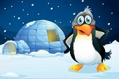 Illustration of a penguin standing near the igloo