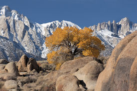 picture of mt whitney  - view of mt - JPG
