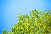Green leaves and blue sky summer