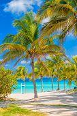 Coconut palm trees  on a sunny day at Varadero beach in Cuba