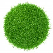 a piece of green lawn