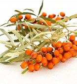 stock photo of sea-buckthorn  - branch with berries of sea buckthorn on a wooden background - JPG