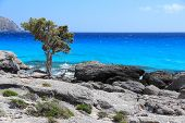 pic of juniper-tree  - Coast of Crete island in Greece. Rocky beach Kedrodasos near famous Elafonisi (or Elafonissi) with old juniper tree.