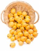 foto of loquat  - loquats in a basket is scattered isolated on a on white - JPG