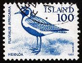 Postage Stamp Iceland 1981 Golden Plover, Bird