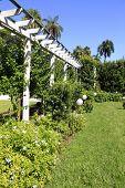 Home Garden With Pergola