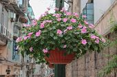 stock photo of ipomoea  - Basket of light - JPG