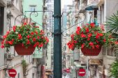 stock photo of ipomoea  - View with two baskets of light - JPG