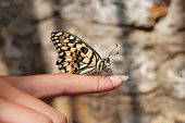 Butterfly Sitting On Finger